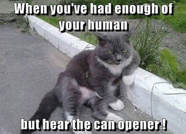 Cat - When you've had enough of your human but hear the can opener!