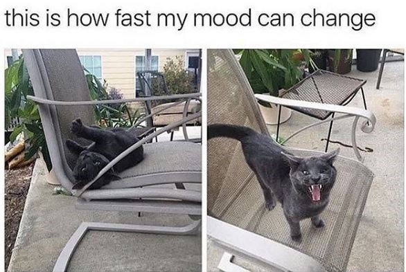 Canidae - this is how fast my mood can change