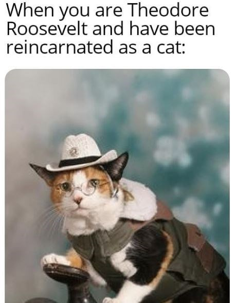 Cat - When you are Theodore Roosevelt and have been reincarnated as a cat: