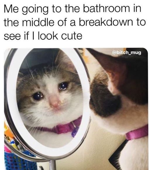 Cat - Me going to the bathroom in the middle of a breakdown to see if I look cute @bitch_mug