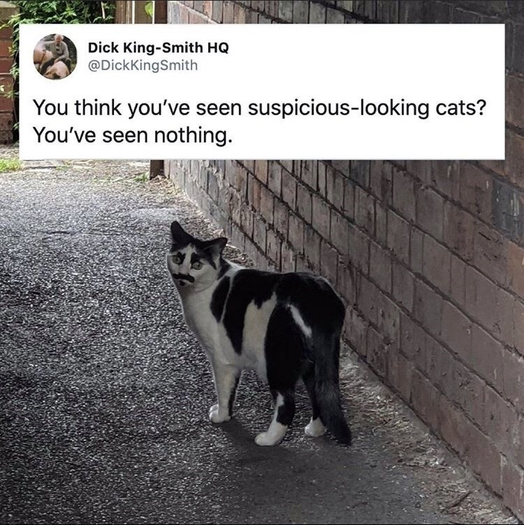 Cat - Dick King-Smith HQ @DickKingSmith You think you've seen suspicious-looking cats? You've seen nothing.