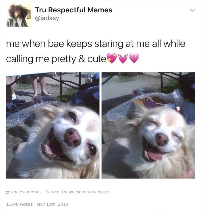 Organism - Dog - Tru Respectful Memes @jadasyl me when bae keeps staring at me all while calling me pretty & cute S wholesomemes Source: theawesomeadventurer 1,548 notes Nov 13th, 2018