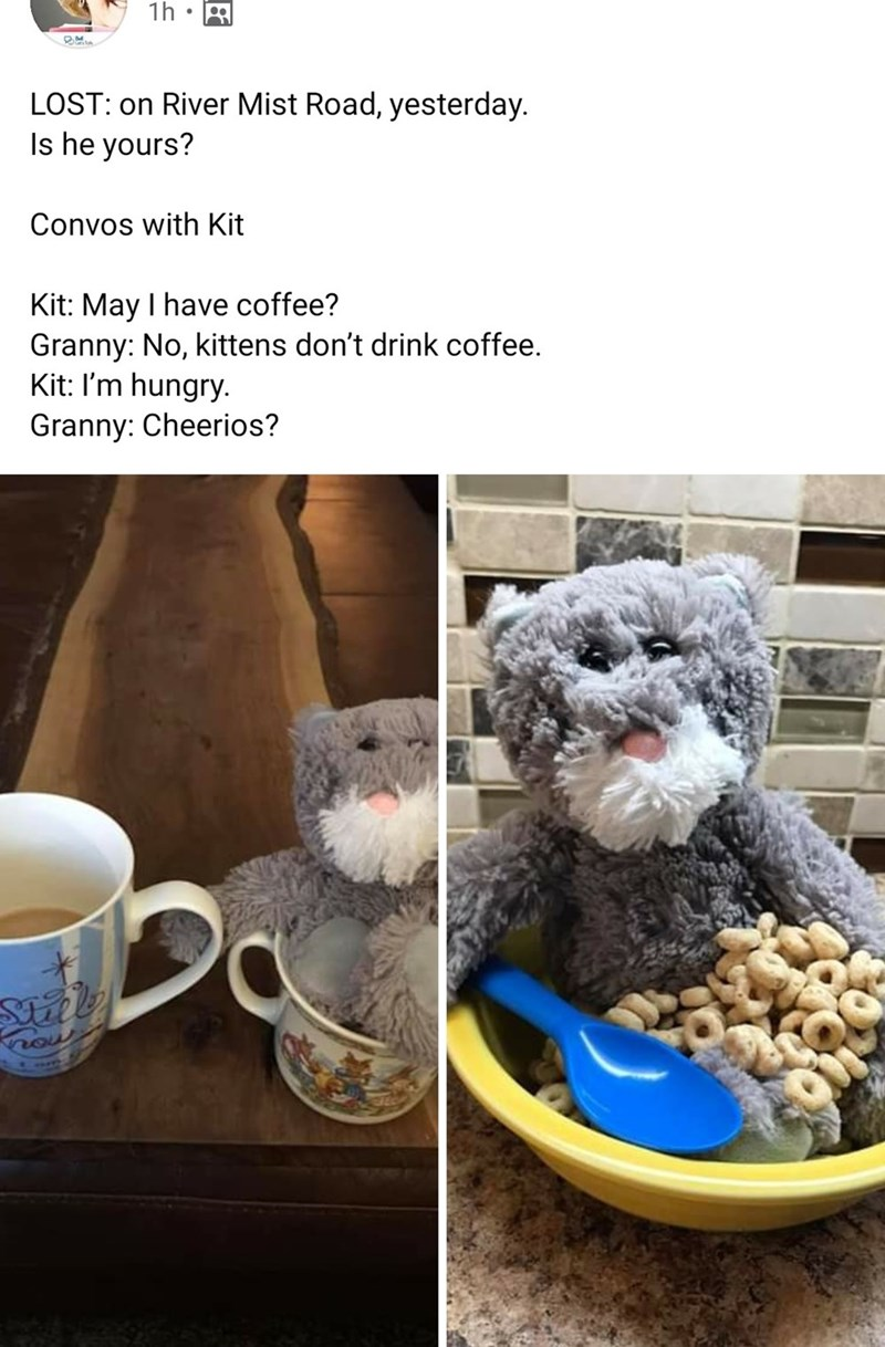 Teddy bear - 1h LOST: on River Mist Road, yesterday. Is he yours? Convos with Kit Kit: May I have coffee? Granny: No, kittens don't drink coffee. Kit: I'm hungry. Granny: Cheerios? now