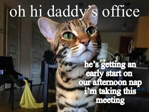 daddy's representative