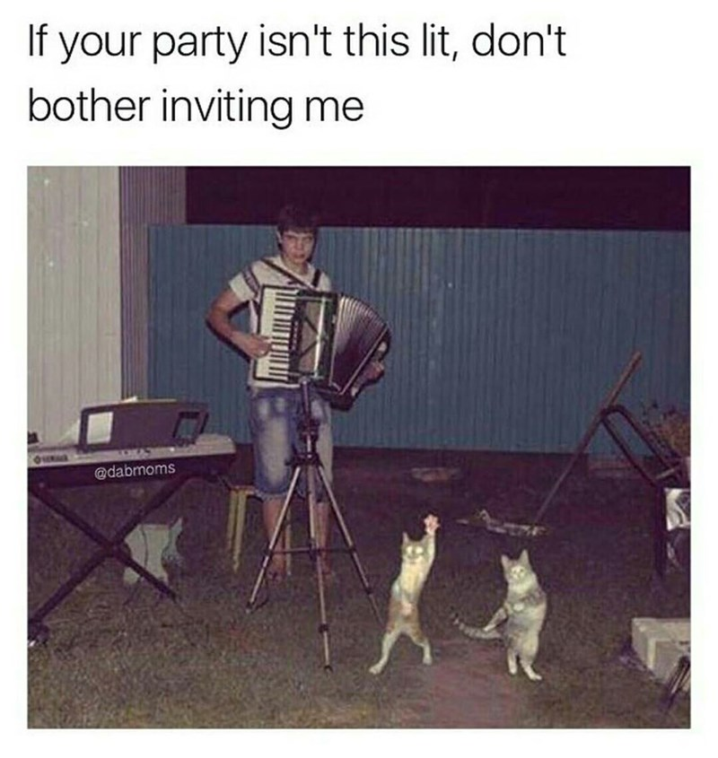 Canidae - If your party isn't this lit, don't bother inviting me @dabmoms