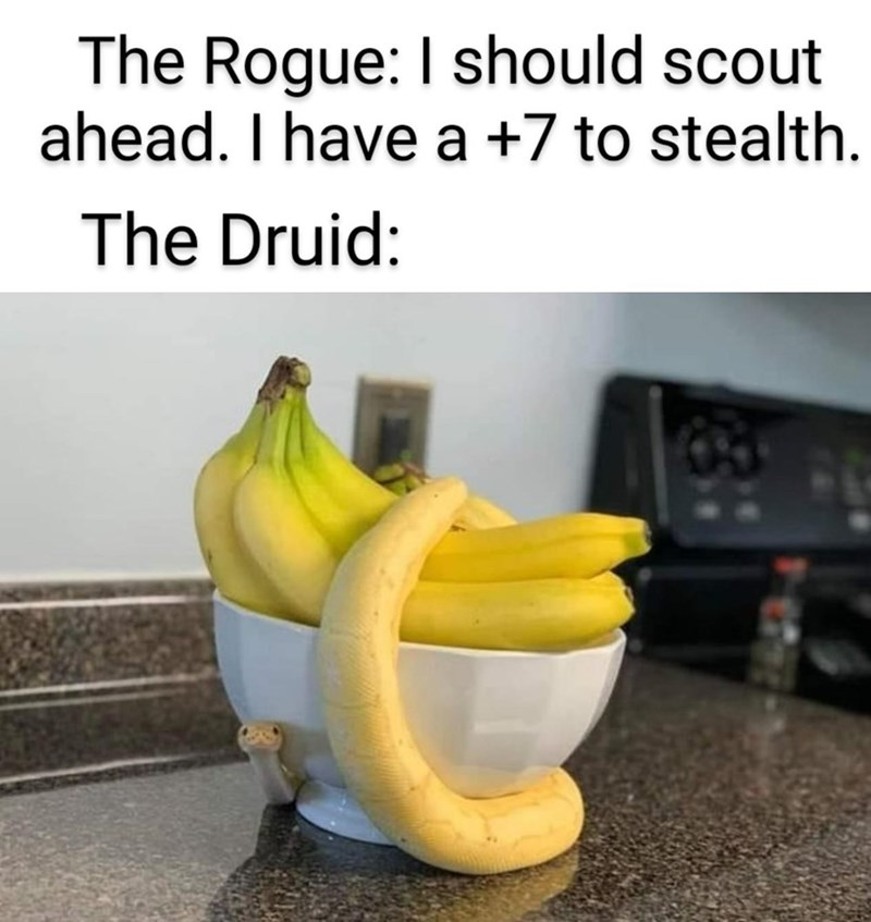 Banana family - The Rogue: I should scout ahead. I have a +7 to stealth. The Druid: