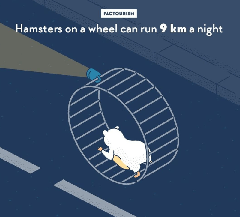 Diagram - FACTOURISM Hamsters on a wheel can run 9 km a night .......