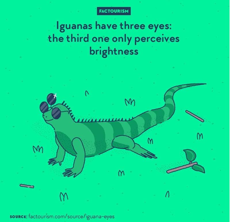 Adaptation - FACTOURISM Iguanas have three eyes: the third one only perceives brightness SOURCE: factourism.com/source/iguana-eyes