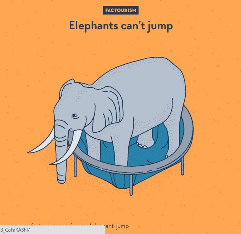 Elephant - FACTOURISM Elephants can't jump hant-jump B_CAFAKASHI/