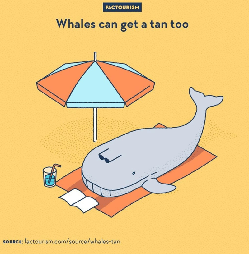 Diagram - FACTOURISM Whales can get a tan too SOURCE; factourism.com/source/whales-tan