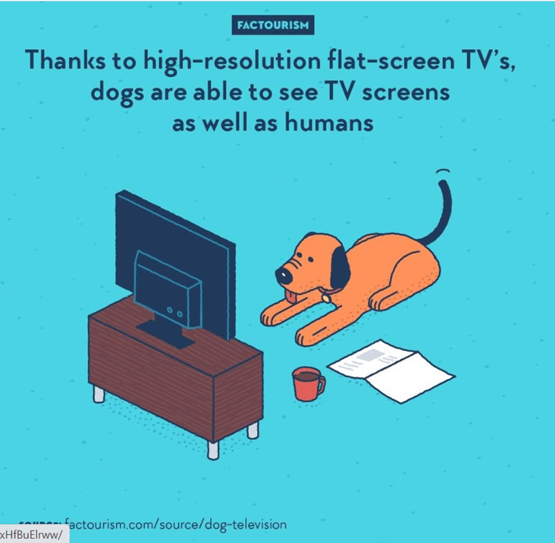 Technology - FACTOURISM Thanks to high-resolution flat-screen TV's, dogs are able to see TV screens as well as humans factourism.com/source/dog-television xHfBuElrww/