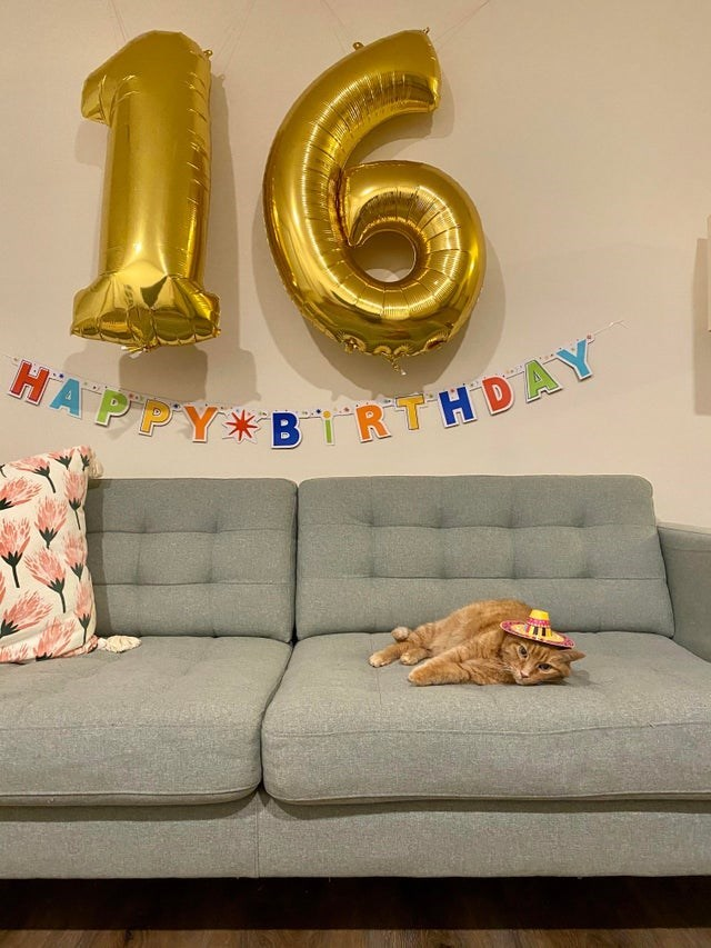 Couch - 16 HA PPY*BIRTHDAY