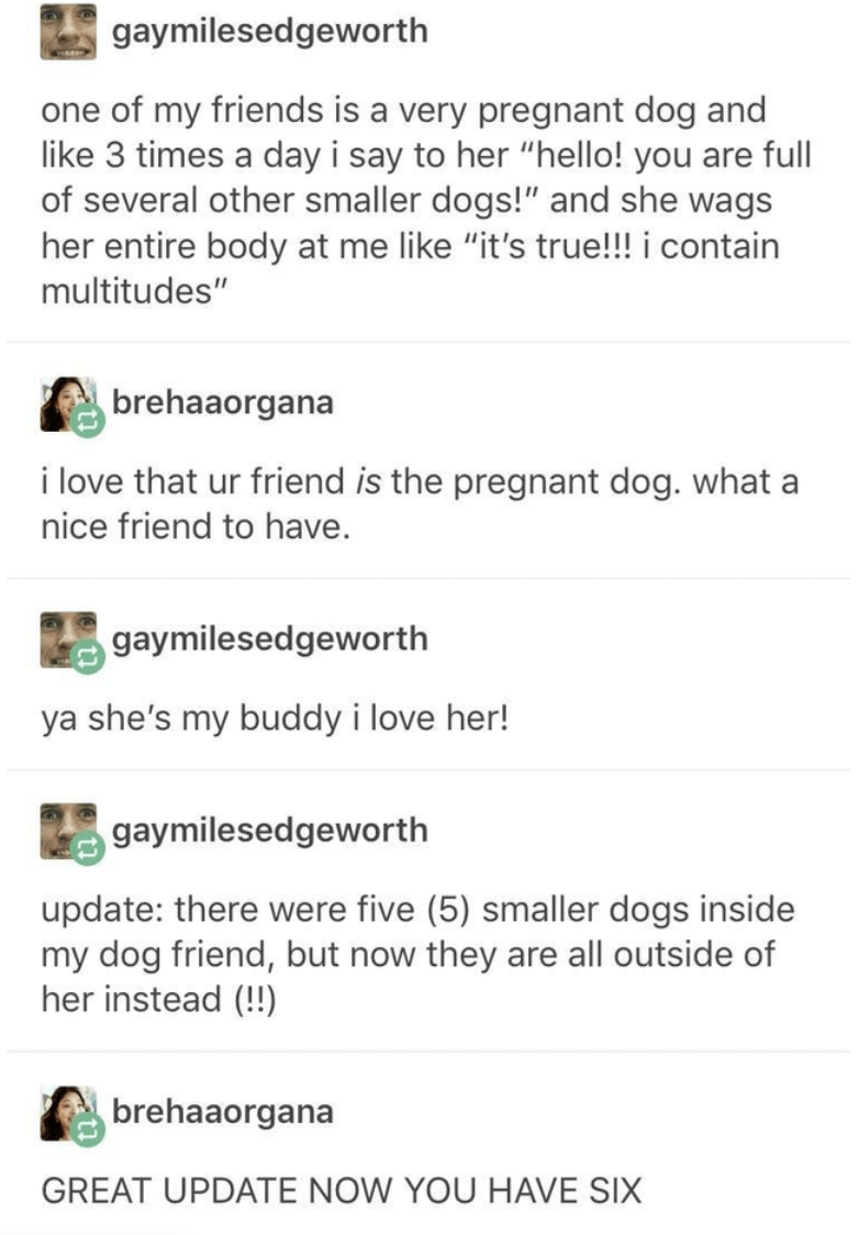 """Text - Text - gaymilesedgeworth one of my friends is a very pregnant dog and like 3 times a day i say to her """"hello! you are full of several other smaller dogs!"""" and she wags her entire body at me like """"it's true!!! i contain multitudes"""" brehaaorgana i love that ur friend is the pregnant dog. what a nice friend to have. gaymilesedgeworth ya she's my buddy i love her! gaymilesedgeworth update: there were five (5) smaller dogs inside my dog friend, but now they are all outside of her instead (!!)"""