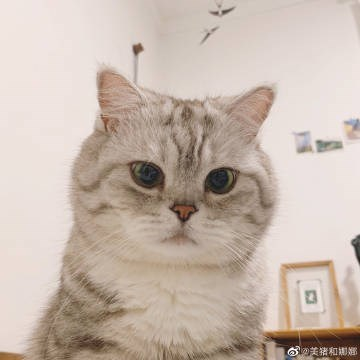 Cat - の美猪和期題