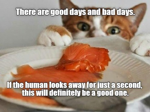 There are good days and bad days. If the human looks away for just a second, this will definitely be a good one. sneaky cat reaching for fish on a plate to steal