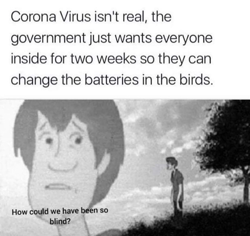 Text - Corona Virus isn't real, the government just wants everyone inside for two weeks so they can change the batteries in the birds. How could we have been so blind?