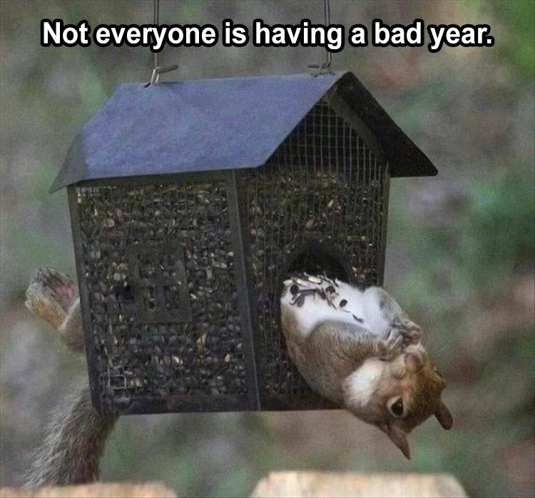 Not everyone having a bad year. squirrel lying on its back in a birdhouse feeder
