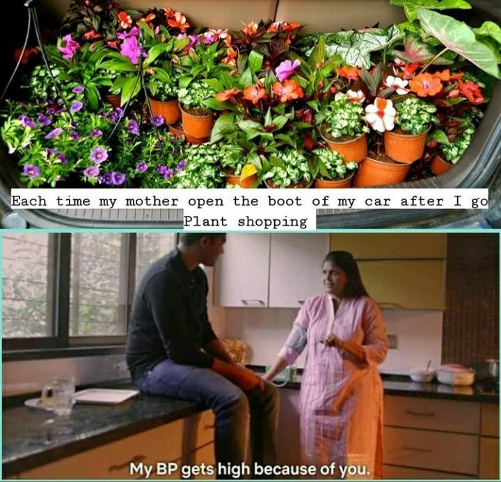 Floristry - Each time my mother open the boot of my car after I go Plant shopping My BP gets high because of you.