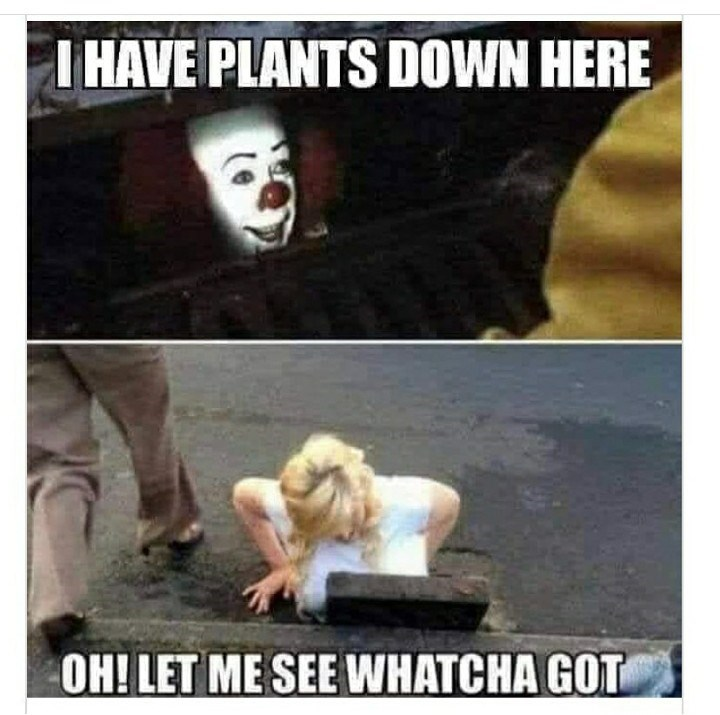 Photo caption - I HAVE PLANTS DOWN HERE OH! LET ME SEE WHATCHA GOT