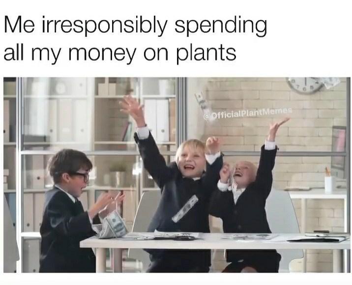 Presentation - Me irresponsibly spending all my money on plants GOfficialPlantMemes