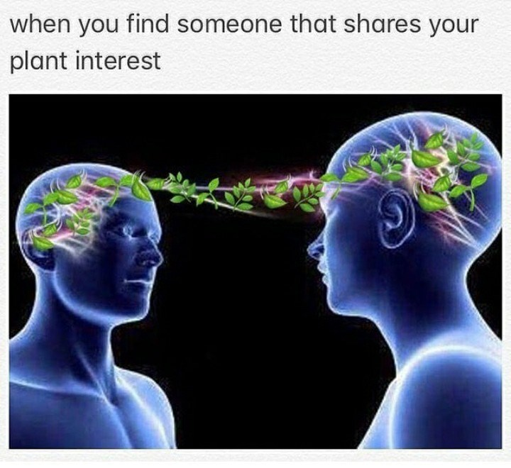 Head - when you find someone that shares your plant interest