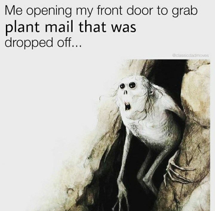 Adaptation - Me opening my front door to grab plant mail that was dropped off... @classicdadmoves