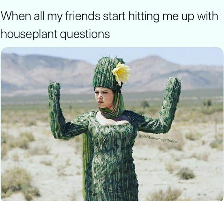 Cactus - When all my friends start hitting me up with houseplant questions @plantsaremygirifriend