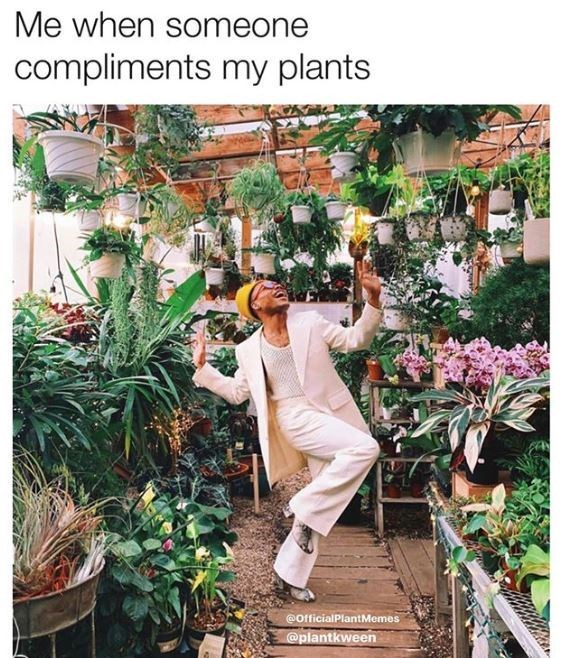 Floristry - Me when someone compliments my plants @OfficialPlantMemes @plantkween