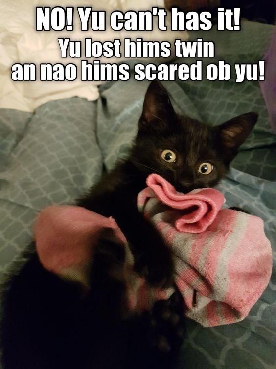 NO! Yu can't has it! Yu lost hims twin an nao hims scared ob yu! cute black kitten snuggling a sock cheezburger speak