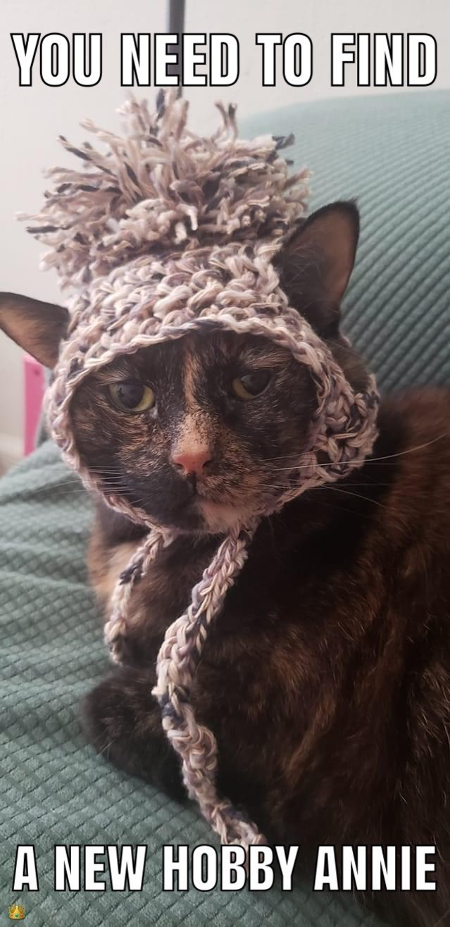 Cat - YOU NEED TO FIND A NEW HOBBY ANNIE