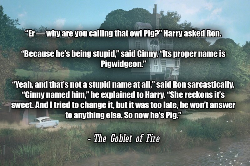 """Text - """"Er-why are you calling that owl Pig?"""" Harry asked Ron. """"Because he's being stupid,"""" said Ginny. """"Its proper name is Pigwidgeon."""" """"Yeah, and that's not a stupid name at all,"""" said Ron sarcastically. """"Ginny named him,"""" he explained to Harry. """"She reckons it's sweet. And I tried to change it, but it was too late, he won't answer to anything else now he's Pig."""" - The Goblet of Fire"""