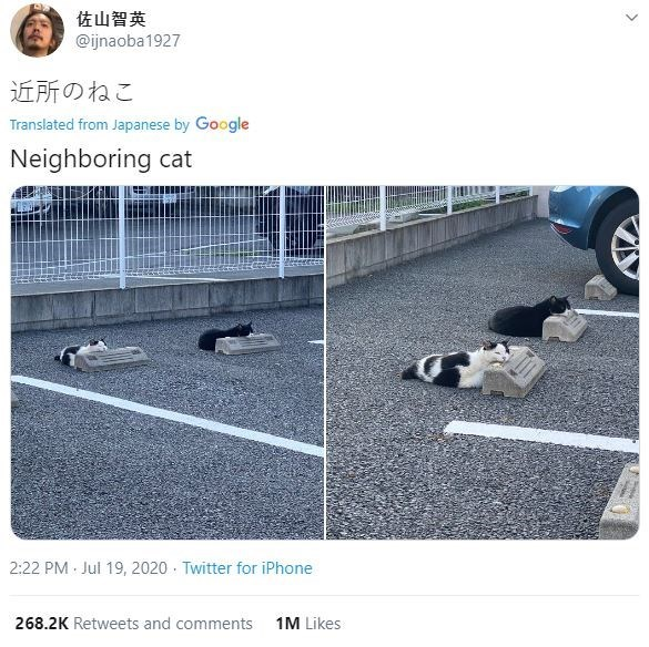 Product - 佐山智英 @ijnaoba1927 近所のねこ Translated from Japanese by Google Neighboring cat 2:22 PM Jul 19, 2020 Twitter for iPhone 268.2K Retweets and comments 1M Likes >