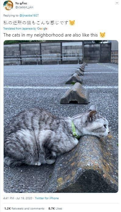 Cat - Yu ยูกินะ @clabbit ykn Replying to @ijnaoba1927 私の近所の猫もこんな感じです図 Translated from Japanese by Google The cats in my neighborhood are also like this 4:41 PM - Jul 19, 2020 - Twitter for iPhone 1.2K Retweets and comments 8.7K Likes