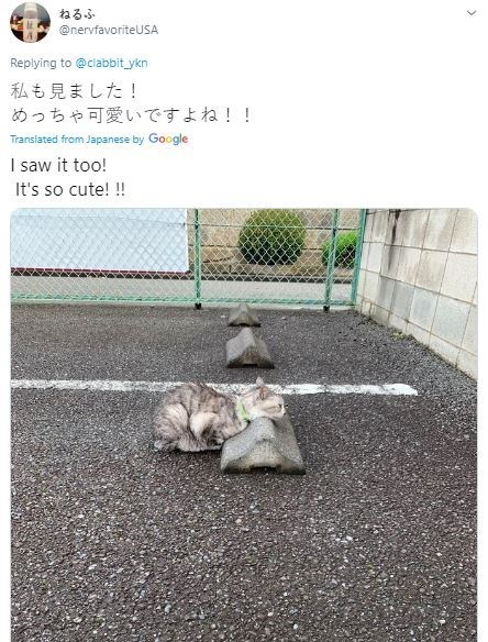 Text - ねるふ @nervfavoriteUSA Replying to @clabbit_ykn 私も見ました! めっちゃ可愛いですよね!! Translated from Japanese by Google I saw it too! It's so cute! !! >