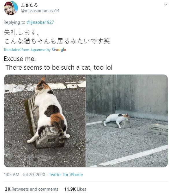 Dog - まさたろ @masasamamasa14 Replying to @ijnaoba1927 失礼します。 こんな猫ちゃんも居るみたいです笑 Translated from Japanese by Google Excuse me. There seems to be such a cat, too lol 1:05 AM Jul 20, 2020 - Twitter for iPhone 3K Retweets and comments 11.9K Likes