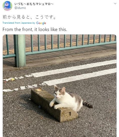 Cat - いづも~おもちマシュマロ~ @idumo 前から見ると、こうです。 Translated from Japanese by Google From the front, it looks like this. >