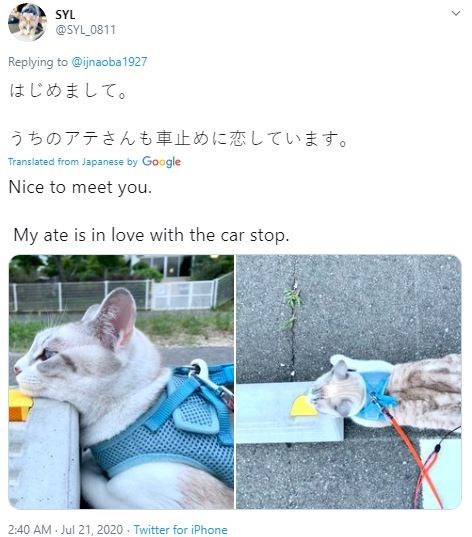 Cat - SYL @SYL_0811 Replying to @ijnaoba 1927 はじめまして。 うちのアテさんも車止めに恋しています。 Translated from Japanese by Google Nice to meet you. My ate is in love with the car stop. 2:40 AM Jul 21, 2020 - Twitter for iPhone