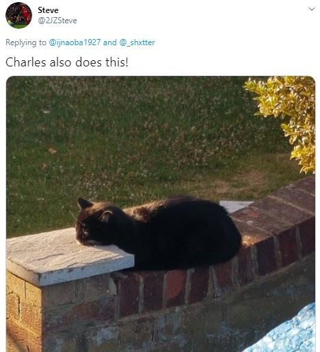 Cat - Steve @2JZSteve Replying to @ijnaoba1927 and @_shxtter Charles also does this!