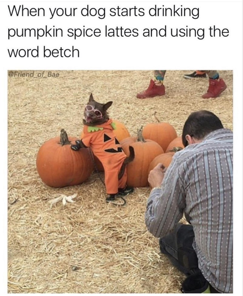 Pumpkin - When your dog starts drinking pumpkin spice lattes and using the word betch @Friend of Bae