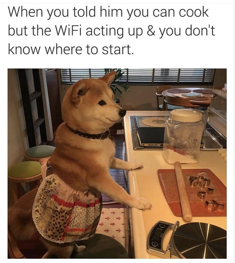 Canidae - When you told him you can cook but the WiFi acting up & you don't know where to start.