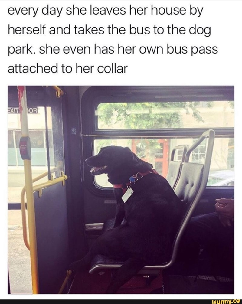 Transport - every day she leaves her house by herself and takes the bus to the dog park. she even has her own bus pass attached to her collar EXIT OR ifunny.co