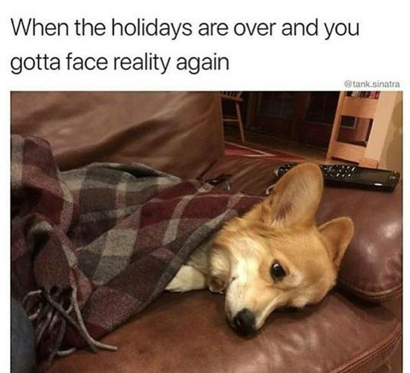 Dog - When the holidays are over and you gotta face reality again @tank.sinatra