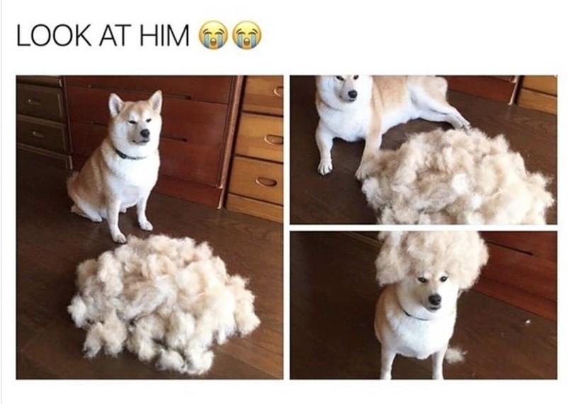 Dog - LOOK AT HIM