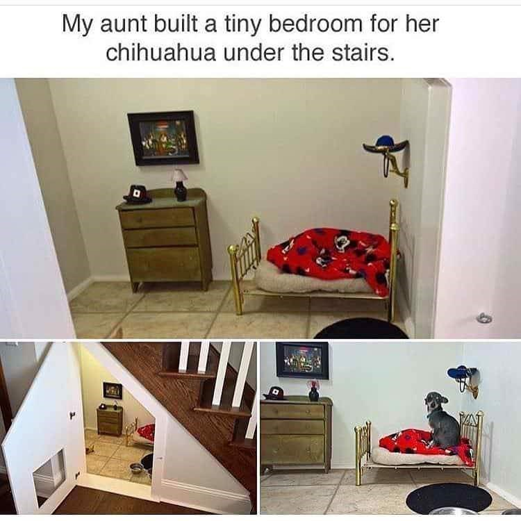 Furniture - My aunt built a tiny bedroom for her chihuahua under the stairs.