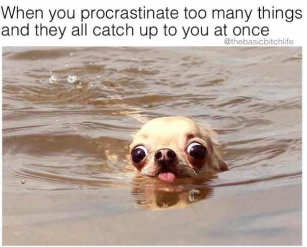 Dog - When you procrastinate too many things and they all catch up to you at once @thebasicbitchlife