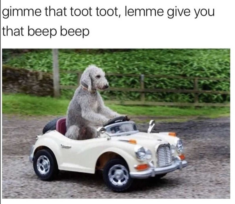 Canidae - gimme that toot toot, lemme give you that beep beep