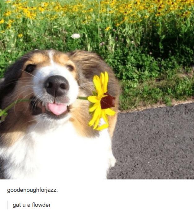 Dog - goodenoughforjazz: gat u a flowder