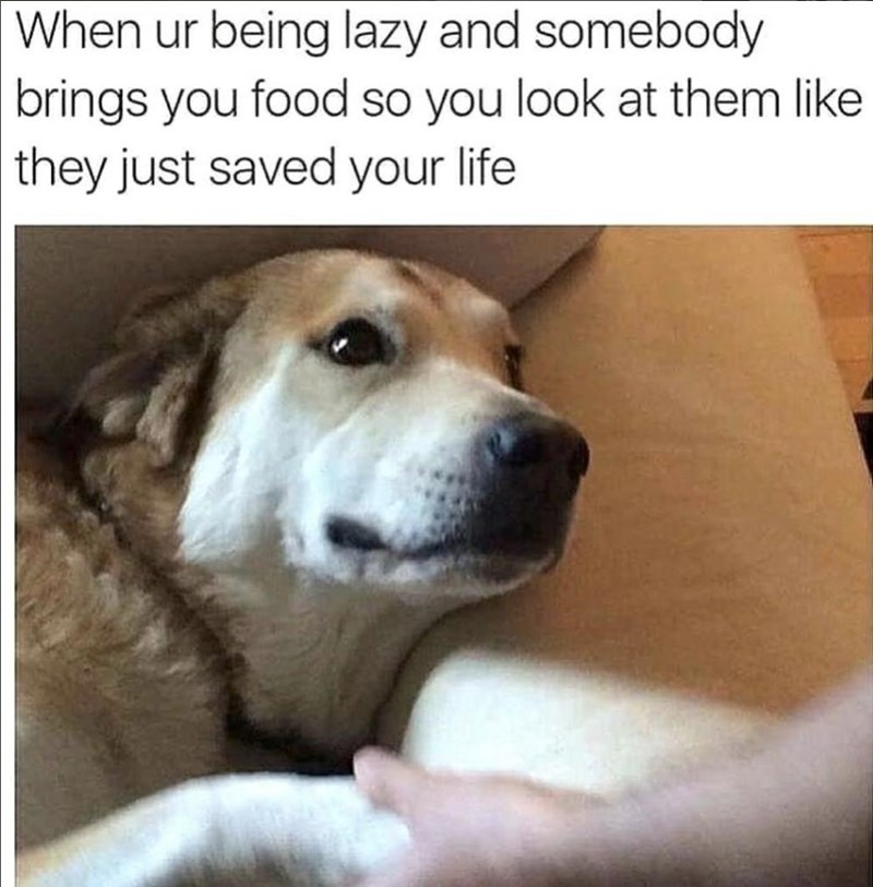 Dog breed - When ur being lazy and somebody brings you food so you look at them like they just saved your life