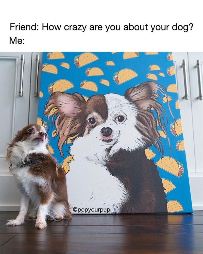 Dog - Friend: How crazy are you about your dog? Me: @роруourpup,
