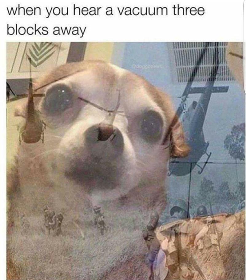 Dog - when you hear a vacuum three blocks away edoggonews